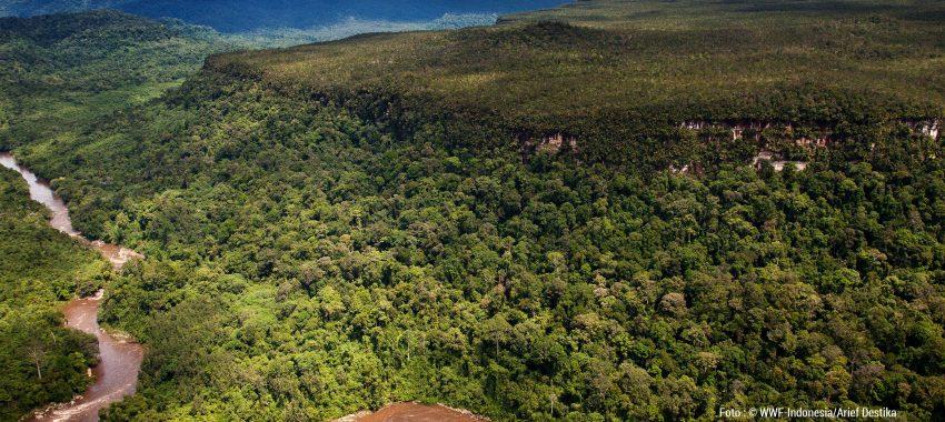 (Indonesia) Penentuan Kebutuhan Hutan Tetap Lestari Untuk Mendukung Pencapaian SDG's