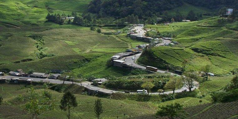 Pemulihan Ekosistem Secara Kolaboratif dalam Aksi Penyelamatan Kawasan Puncak