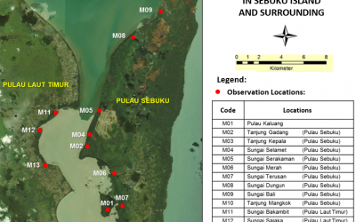 The Effectivity of Mangrove Economic Valuation in Supporting Mangrove Conservation Policy in Sebuku Island, Kotabaru, South Kalimantan Province