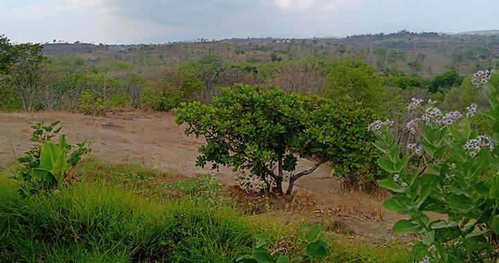Pemetaan Tata Guna Lahan untuk Pengembangan Potensi Sumber Daya dan Lingkungan Hidup di Kabupaten Situbondo