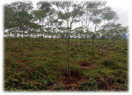 Contribution of Agroforestry Systems to Farmer Income in State Forest Areas: A Case Study of Parungpanjang, Indonesia