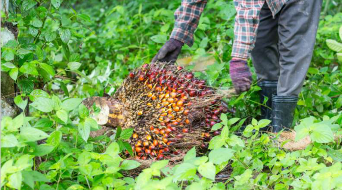The Guidelines for Planning  of Regional  Sustainable Plantation  based on  a Jurisdictional Approach  (Case Study:  Oil Palm  Plantation)