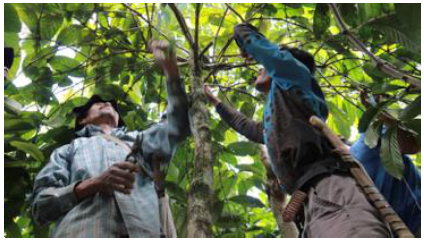 The Impact of Joint Community Forest Management (PHBM) on Local Community Income in Upstream of Ciliwung Watershed, Bogor Regency-Indonesia